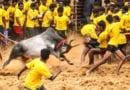 क्या है जल्लीकट्टू का इतिहास और विवाद  – What is Jallikattu Protest