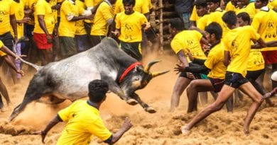 what is jallikattu protest